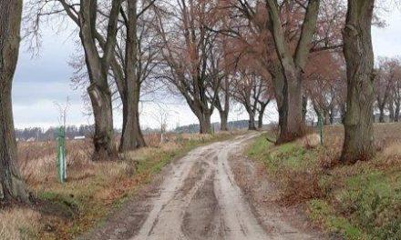 Dotacja zUMWW nazakup sadzonek drzew miododajnych